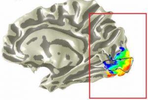Retinotopic mapping of visual field