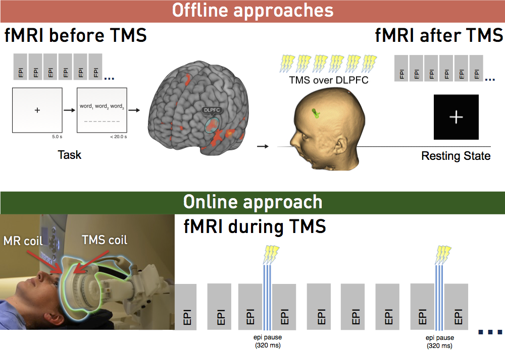 MRI can used to improve brain stimulation before, after and during TMS. TMS applied during fMRI allows for the investigation of immediate neural effects